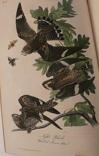 RARE AUDUBON BOOK BIRDS OF AMERICA 1839