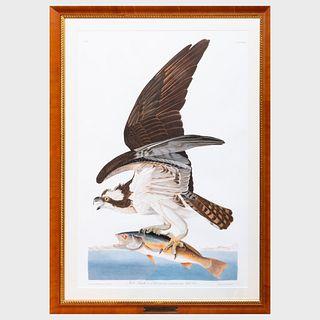 After John James Audubon (1785-1851): Fish Hawk or Ospry