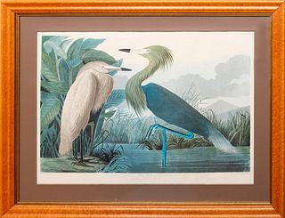 After John James Audubon (1785-1851): Purple Heron