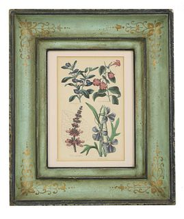 A matched set of eight hand-coloured engraved botanical prints,