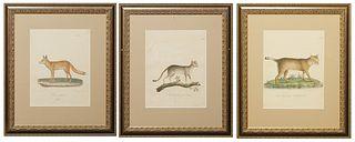 "F.C. Vogel (1806-1865, German), Three Octavo Prints, 19th c., consisting of ""Felis Chaus: fem. (Guldenstedf),"" ""Felis maniculata: fem. (Mus Francof),"""