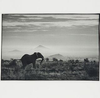 Peter Beard, framed photograph