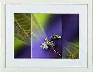LISA REDBURN, Lady in Lavender