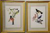 Set of four After Jean Theodore Descourtilz (1796-1855),  large folio hand colored chromolithographs,  (1) Plate 17 Trogon Rosalba, ...