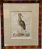 Mark Catesby (1679-1749),  pair of hand colored copper plate engravings,  (1) The Blew Heron T76;  (2) The Brown Biltern T78 Ardea S...