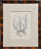 Mark Catesby (1679-1749),  pair of hand colored copper plate engravings,  (1) Cancer Arenarius T35;  (2) Corolodendron Anguis T49,  ...