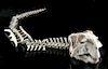 Near-Complete Chinese Psittacosaurus Dinosaur Skeleton