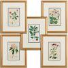(5) Floral engravings, E. D. Smith, P. Bessa