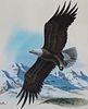 """Don Balke (B. 1933) """"Bald Eagle"""""""