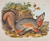 After JOHN JAMES AUDUBON, (American, 1785-1851), Grey Fox. Canis (Vulpes) Virginianus (Plate XXI), hand-colored lithograph, sight: 20 x 24 in., frame: