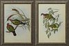 """John Gould & H.C. Ritcher, """"Chalcophaps Chrysocholra,"""" and """"Ptlinopus Superbaus,"""" early 20th c., pair of dove prints, presented in p..."""