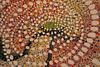 BRENDA LOUIE, Flowers from the Sky Series 0211