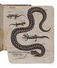 LAURENTI, Joseph Nicolai (1735-1805). Specimen Medicum, exhibens Synopsin Reptilium Emendatam cum Experimentis circa Venena et Antidota Reptilium Aust