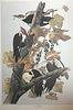 Audubon Pileated Woodpecker by M. Bernard Loates