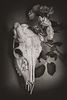 SUZANNE ROSE, Skull with Roses