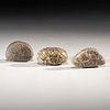A Group of Granite Loafstones, Longest 2-1/4 in.