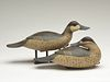 Rigmate pair of ruddy ducks, Bob White, Tullytown, Pennsylvania.