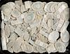 Collection of Chinese engraved abalone game tokens