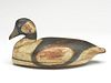 Extremely rare bufflehead drake, Arthur Cobb, Cobb Island, Virginia, last quarter 19th century.