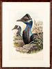Two color bird lithographs