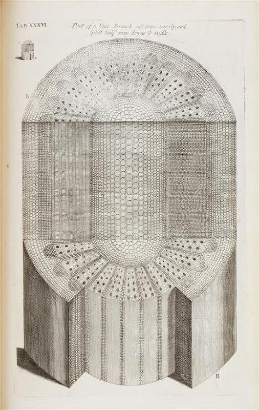 Botany Grew Nehemiah The Anatomy Of Plants London 1682 First