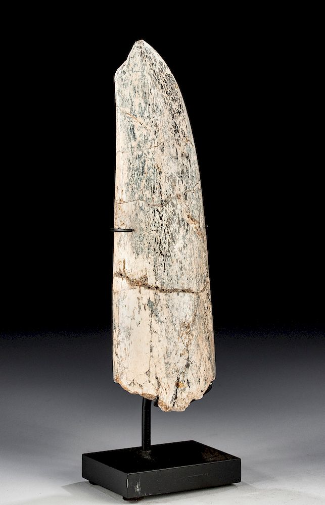 Fossilized Woolly Mammoth Tusk Tip - Great Color by Artemis
